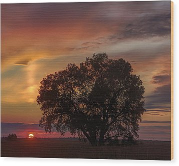 Wood Print featuring the photograph Light Pillar And Cottonwood by Rob Graham