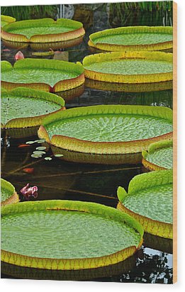 Lilly Pads Wood Print by Frozen in Time Fine Art Photography