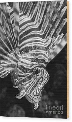 Lionfish Wood Print by Jamie Pham