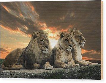 Lions Wood Print by Christine Sponchia