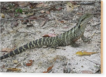 Lizard  Wood Print by Joyce Woodhouse