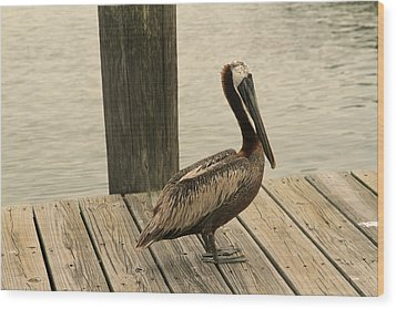 Louisiana Brown Pelican Wood Print by Ronald Olivier