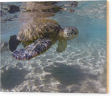 Maui Turtle Wood Print by James Roemmling