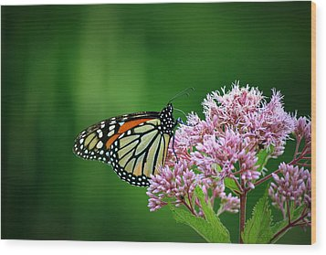 Monarch In Light  Wood Print
