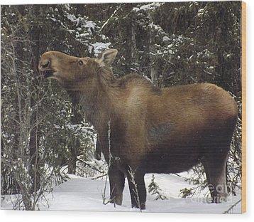 Moose Wood Print by Jennifer Kimberly
