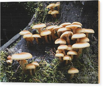 Wood Print featuring the photograph Mushrooms On A Stump by Chalet Roome-Rigdon