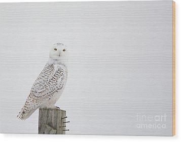 Observant Wood Print by Cheryl Baxter