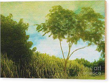 Ode To Monet Wood Print by Amar Sheow