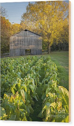 Old Tobacco Barn Wood Print by Brian Jannsen