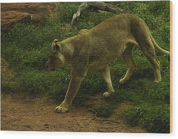 On The Prowl Wood Print by Lindy Spencer