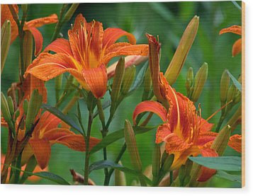 Wood Print featuring the photograph Orange Lilly by Cathy Shiflett