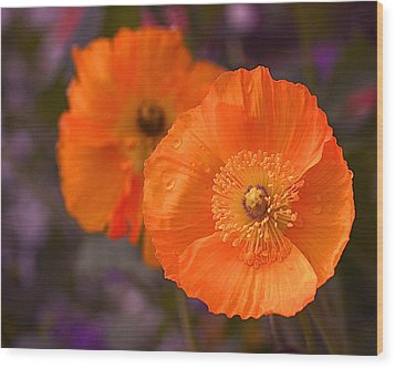 Orange Poppies Wood Print by Rona Black