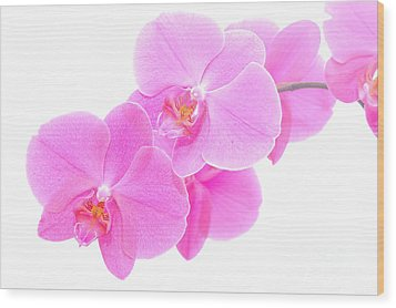 Orchid Isolated Wood Print by Michal Bednarek
