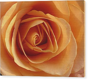 Peach Rose Wood Print by Gerry Bates