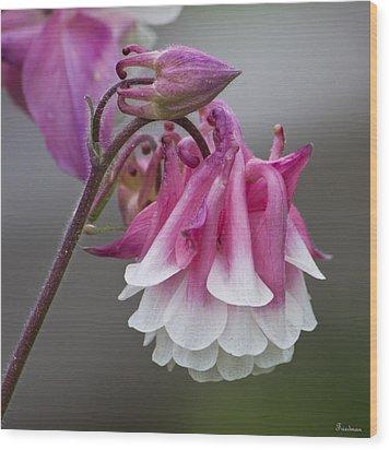 Pink Columbine Wood Print by Michael Friedman