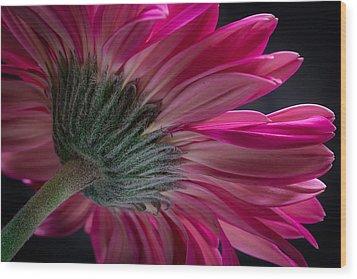 Pink Flower Wood Print by Edgar Laureano