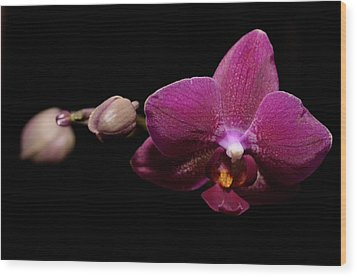 Pink Orchid Wood Print by Tommytechno Sweden