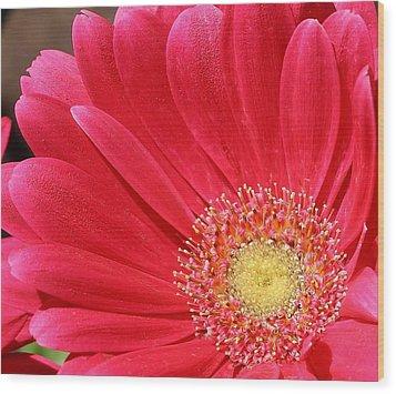 Pink Sensation Wood Print by Bruce Bley