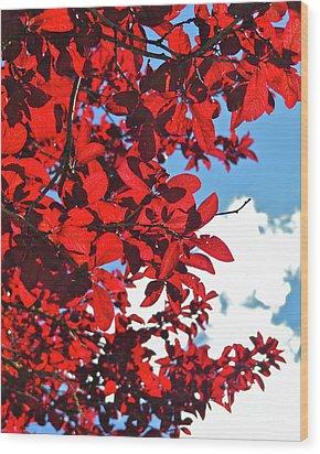 Plum Tree Cloudy Blue Sky 3 Wood Print by CML Brown
