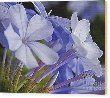 Plumbago Summer Solstice In New Orleans Louisiana Wood Print by Michael Hoard