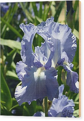 Purple Bearded Iris Wood Print