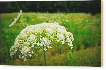 Queen Anne's Lace Wood Print by Carol Toepke