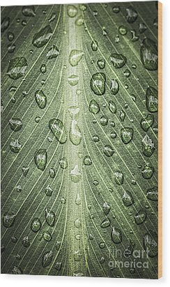 Raindrops On Green Leaf Wood Print by Elena Elisseeva