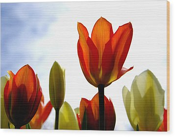 Wood Print featuring the photograph Reaching For The Sun by Marilyn Wilson