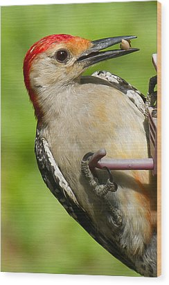 Red Bellied Woodpecker Wood Print