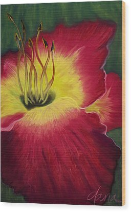 Red Day Lily Wood Print by Dana Strotheide