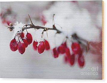 Red Winter Berries Under Snow Wood Print by Elena Elisseeva