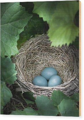 Robin Egg Blues Wood Print by James Barber