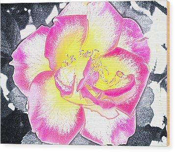 Rose 3 Wood Print by Pamela Cooper