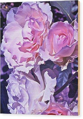Rose 60 Wood Print by Pamela Cooper