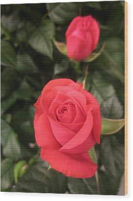 Roses In Red Wood Print