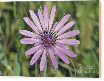 Wood Print featuring the photograph Salsify Flower by George Atsametakis
