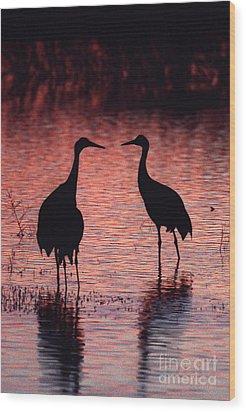 Sandhill Cranes Wood Print by Steven Ralser