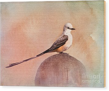 Scissor-tailed Flycatcher Wood Print