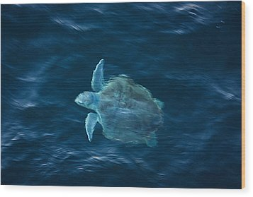 Wood Print featuring the photograph Sea Turtle by Tammy Schneider