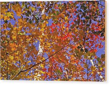 Shades Of Fall Wood Print by Dennis Bucklin