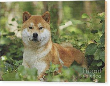 Shiba Inu Dog Wood Print by Jean-Michel Labat