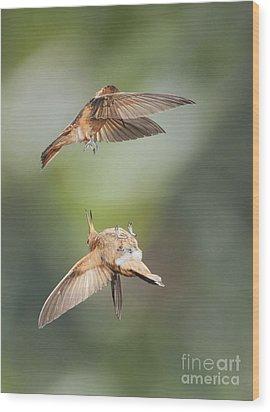 Wood Print featuring the photograph Shining Sunbeam Hummingbirds by Dan Suzio