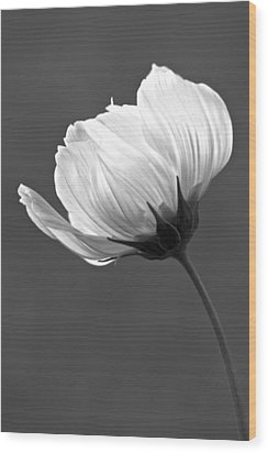 Simply Beautiful In Black And White Wood Print by Penny Meyers