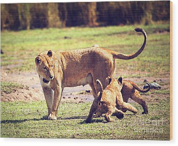Small Lion Cubs With Mother. Tanzania Wood Print by Michal Bednarek