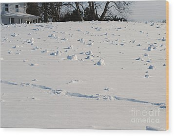 Snow Rollers Wood Print by Lila Fisher-Wenzel