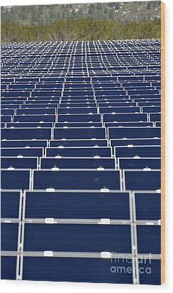 Solar Panels In Farm Wood Print by Sami Sarkis