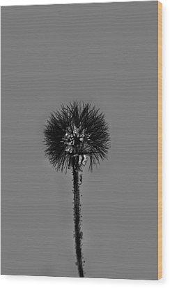 Spring Dandelion Wood Print by Tommytechno Sweden