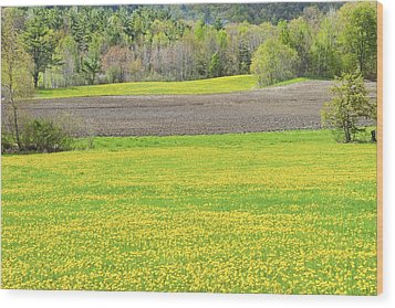 Spring Farm Landscape With Dandelion Bloom In Maine Wood Print by Keith Webber Jr