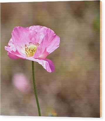 Spring Poppy Flower Wood Print by P S