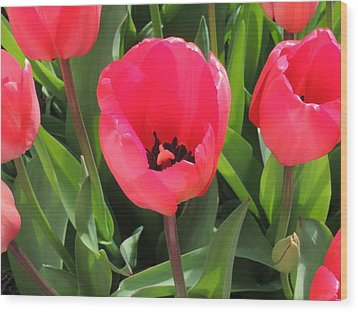 Wood Print featuring the photograph Spring Surprise by Karen Horn